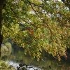 Autumn by the River Severn