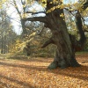 Clumber Park in Autumn
