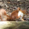 Acrobatic squirrel