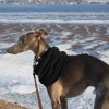 A frozen Exe Estuary with Jasper