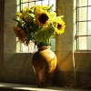 Sunflowers in Parracombe Church