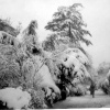 Snow in Wallington 1963