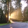 Centre Parcs morning rays