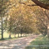 The Avenue, Badbury Rings, Near Wimborne Dorset, Postcard