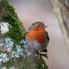 Robin at Stover Park
