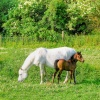 Horses near Brookhouse South Yorkshire