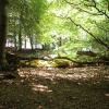 Dappled light at Arne, Dorset