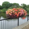 View of the River Severn and flower display