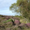 The Heather Walk at Studland, Dorset