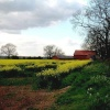 Rape seed field and red barn