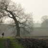Walking the dogs, Middle Claydon, Bucks