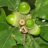 A picture of Acorns at Derwentwater