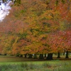 Autumn in Tatton Park