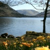 Ullswater and Wordworths Daffodils