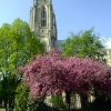 Beverley Minster April 2011