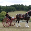 Carriage in the Park