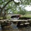 Clapper Bridge, Malham