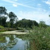 Bookham Common Pond- (well one of them)
