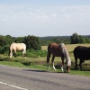 New Forest near Burley in Hampshire