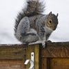 Itchy Squirrel