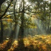 Autumn Light 1
