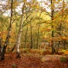 Autumn Colours, Cannock Chase