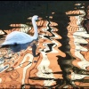 Waterside - A Swan's View