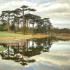 Reflections - Attingham Park, Shrewsbury