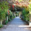 Rose Covered Pergola at Hever Castle