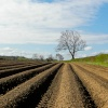 Potato fields South Yorks