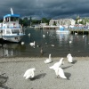 Swans and boats, Bowness