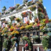 Profusion of window box flowers outside a London pub