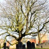 Saint Mary De Castro Church and Churchyard, Leicester