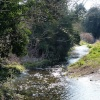 Bekesbourne (River Nailbourne 2013)