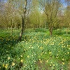 Missed the blaze of daffs, should have gone o Brockdish earlier