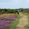 Nature Walk on Dunwich Heath