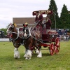 Heavy Horse Show, Langford, Essex