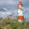 Grasses at Souter Lighthouse