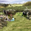 Haymaking in Checkley Herefordshire