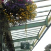 Hanging Baskets, Swanage Station