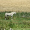 Horse on a field in Henstead