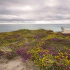 Heather at Hengistbury