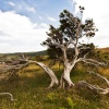 Torver Common Tree Coniston