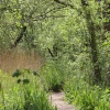 Footpath at Leighton Moss RSPB reserve, Silverdale