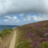 Heather at Bedruthan
