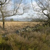 Stone Wall on Moorland above Meerbrook, Staffordshire