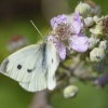 Butterfly, Coombe Abbey