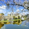 Spring at Leeds Castle