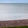 Swans swimming in the sea at Budleigh