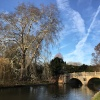 Clare College Bridge amidst nature